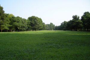 野川公園の芝生