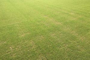 競技用芝生