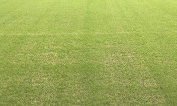 競技場の芝