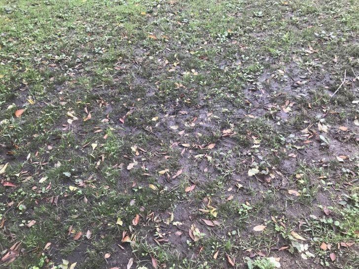 猿江恩賜公園の芝生広場