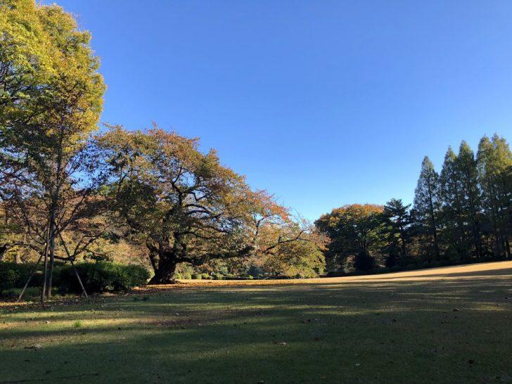 新宿御苑・千駄ヶ谷門そばの芝生広場