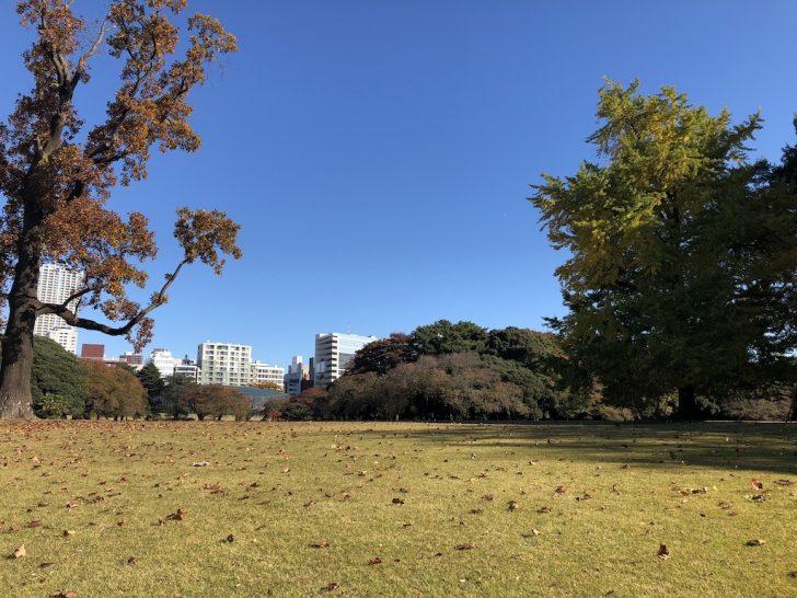新宿御苑のユリの木