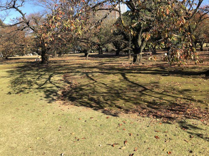 新宿御苑の桜の木陰