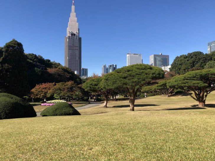 新宿御苑日本庭園側の芝生