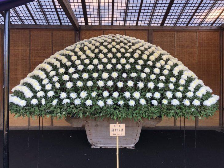 新宿御苑の菊花壇