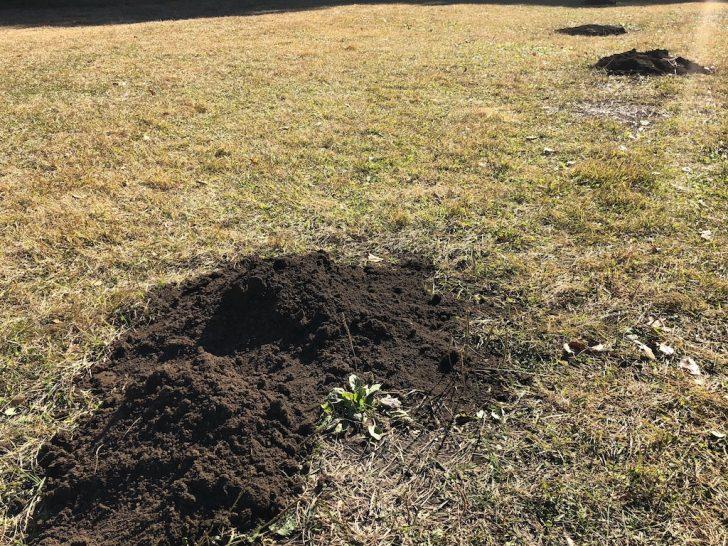 芝生のモグラ塚