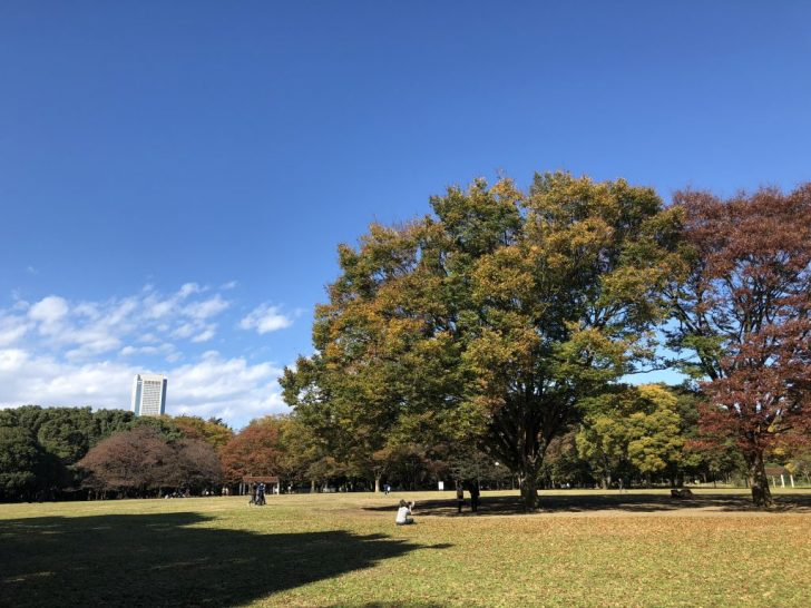 代々木公園の中央広場