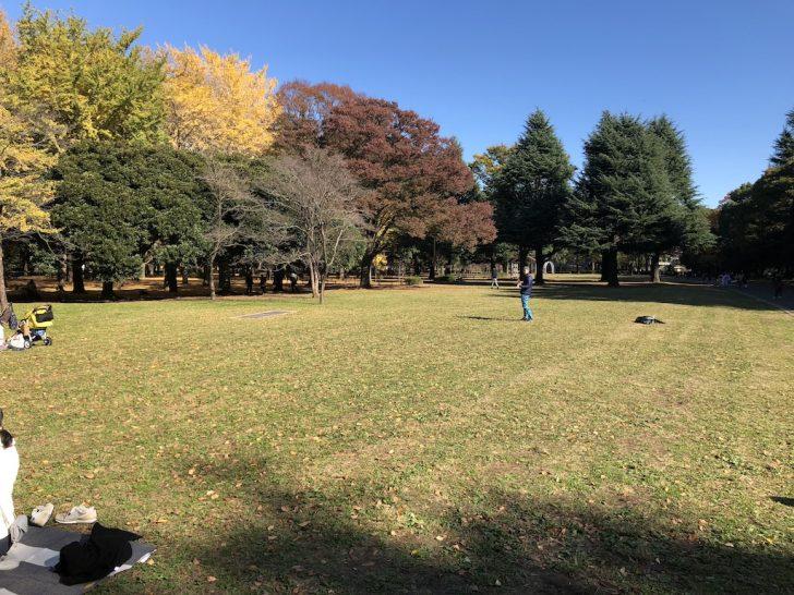 代々木公園バラ園そばの芝生広場
