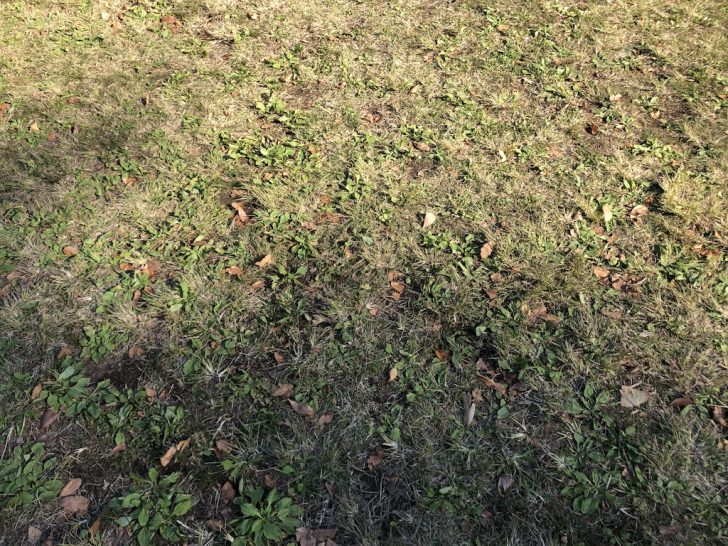 代々木公園の芝生