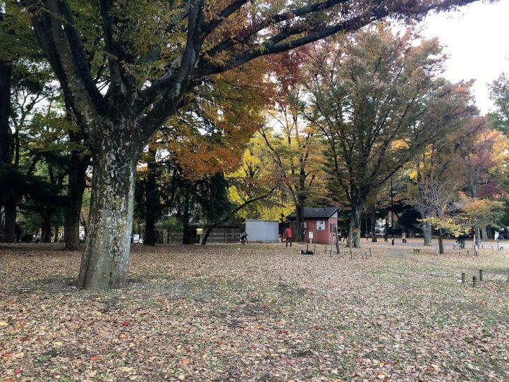 上野公園の林
