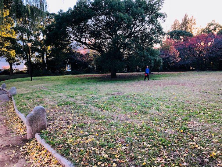 猿江恩賜公園ティアラこうとう裏の芝生
