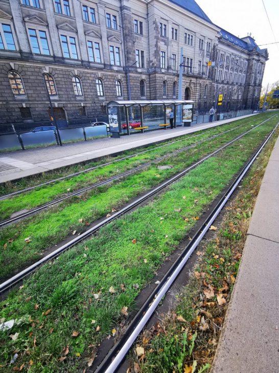 ヨーロッパの路面電車の軌道緑化