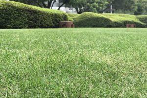 外構の芝生化