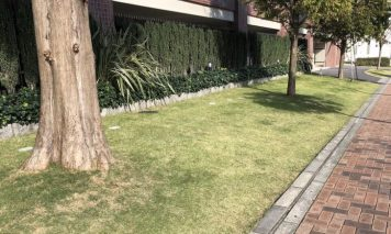 接道部分の緑化