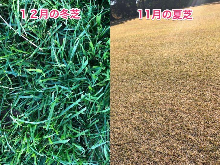 夏芝と冬芝の違い