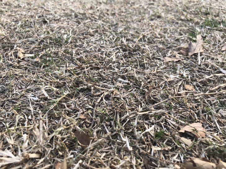 夏芝の冬枯れ