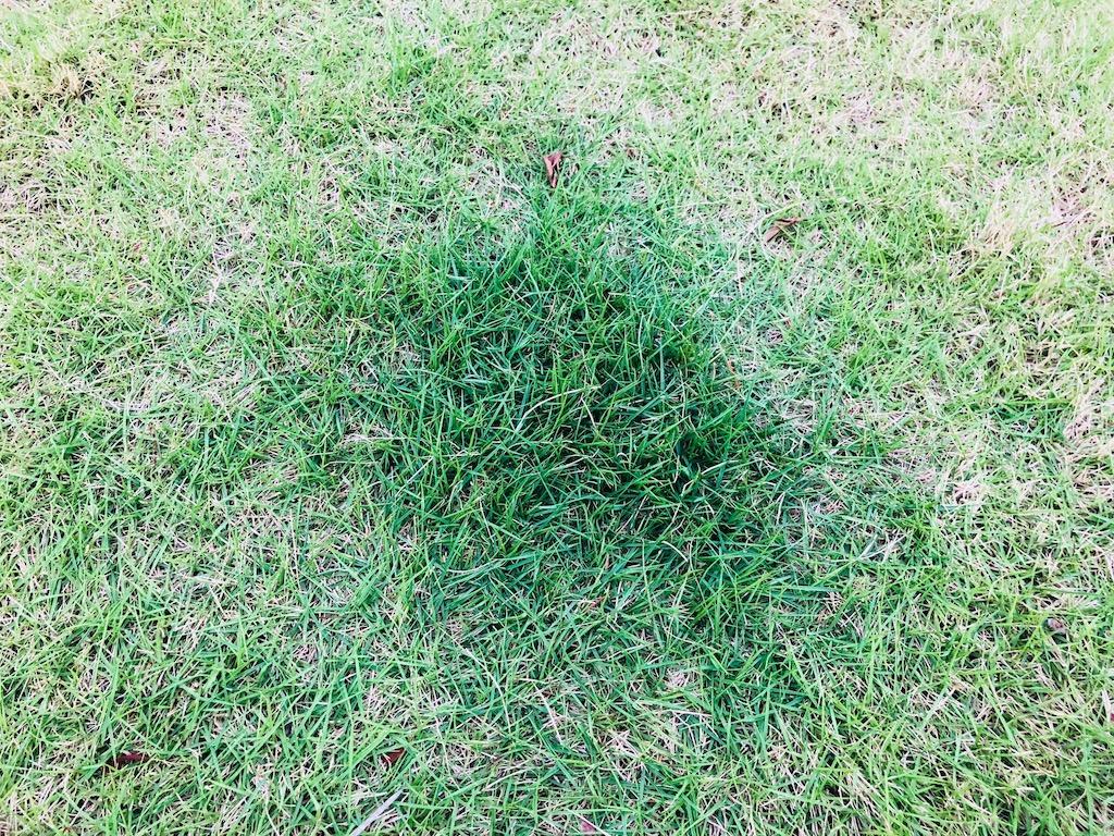 芝生の濃淡