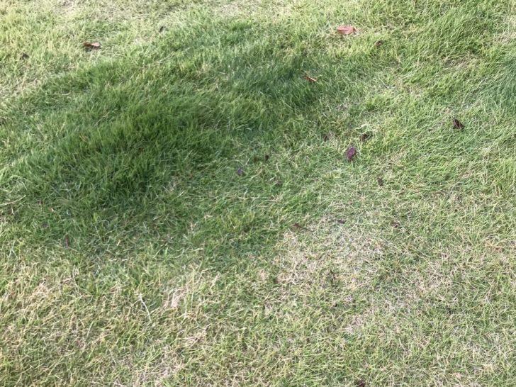 色ムラのある芝生