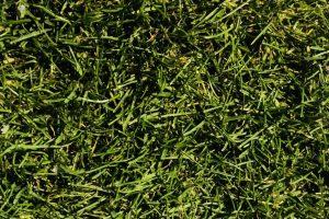 南池袋公園の冬芝