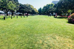 山下公園の芝生広場
