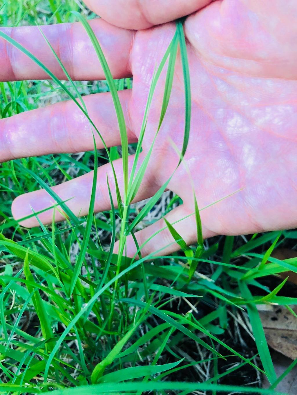 惣門の芝生5月