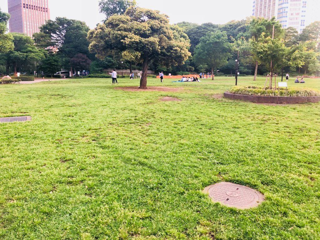 芝公園の芝生広場5月