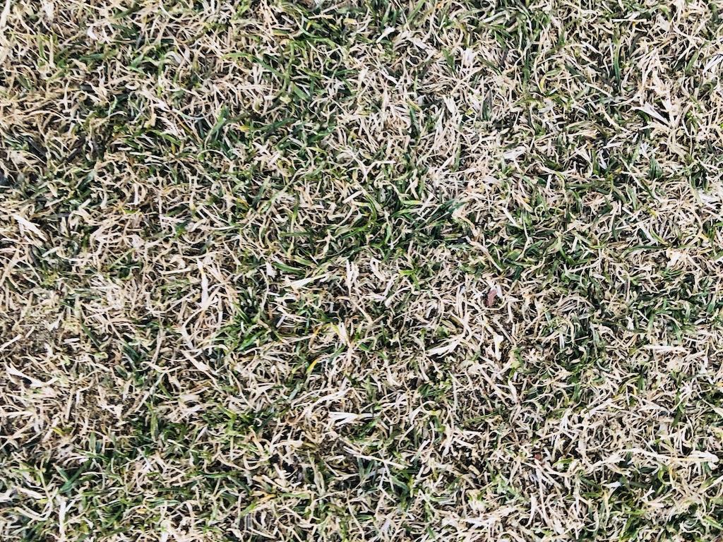 横浜・アメリカ山の芝生