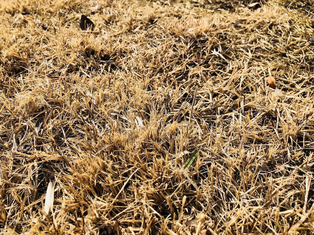惣門の芝生