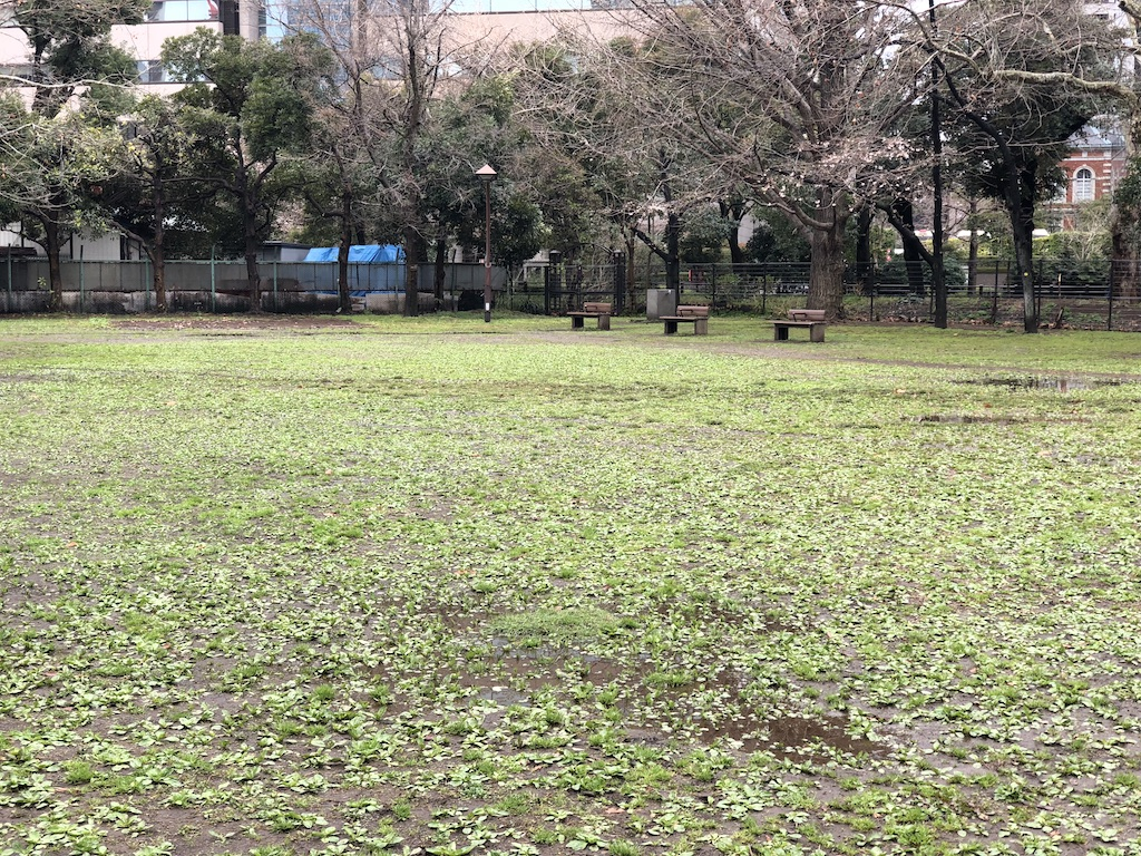 日比谷公園の草地広場