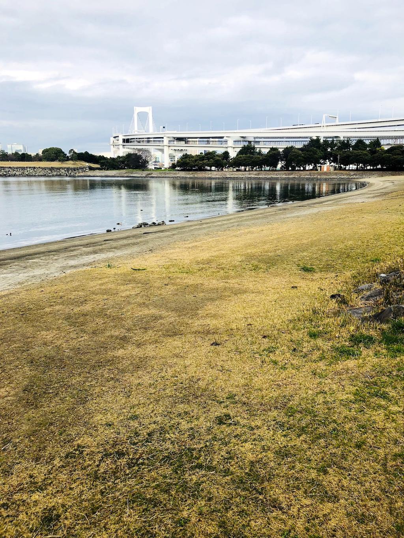 お台場海浜公園の芝生