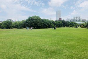 新宿御苑の芝生(5月中旬)